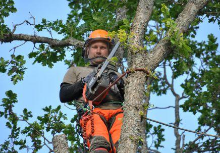 Trädvård av certifierad Aborist i göteborg