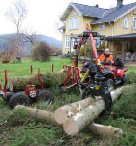 Bortforsling trädfällning