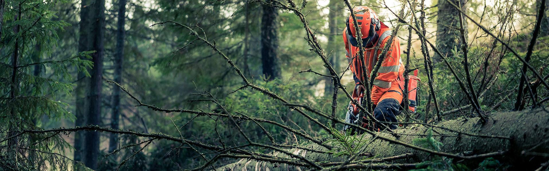 skogsavverkning runt göteborg