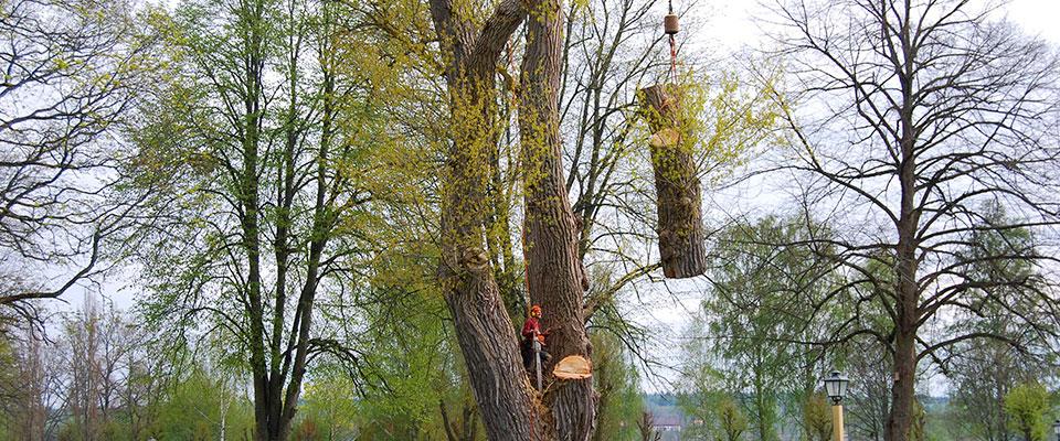 Trädfällning bit-för-bit