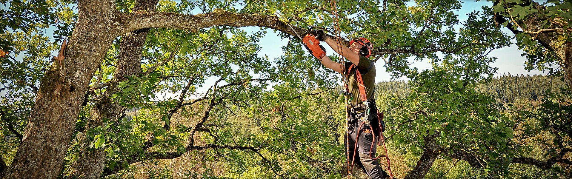 trädfällning med klättring