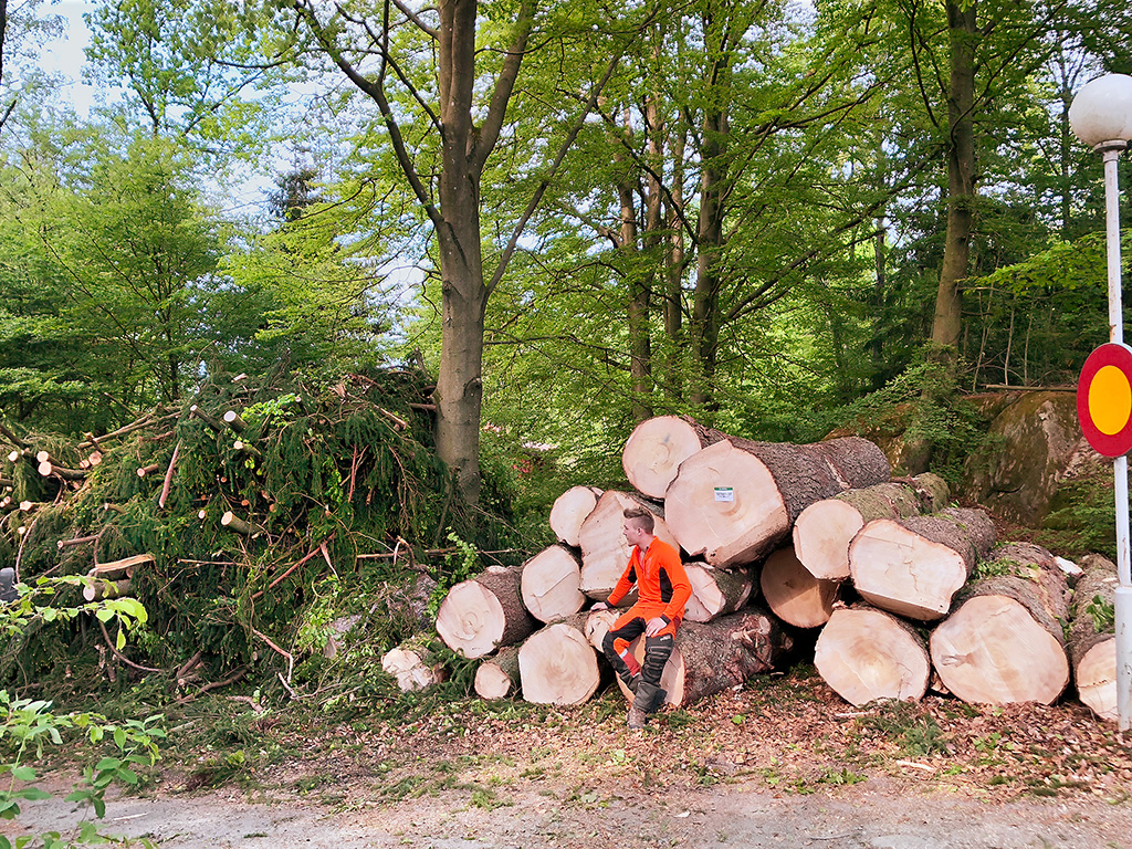 Timmer avverkat med vår skördare. Tradnu AB trädfällning i och runt Göteborg med omnejd