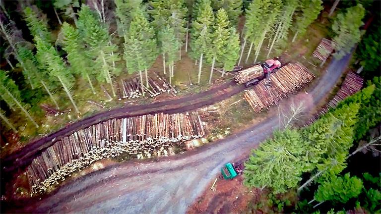 Trädavverkning Tradnu AB i och runt Göteborg med omnejd