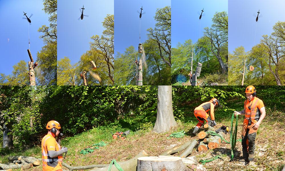 Trädavverkning bit för bit med helikopter