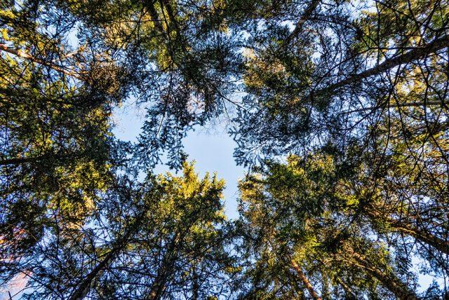 Trädbesiktning, Trädtjänster och trädvård - Träd.nu
