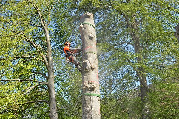 Bit för bit nedtagning av träd, Tradnu AB