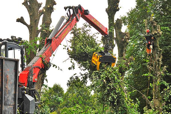 Bortforsling av träd vid beskärning