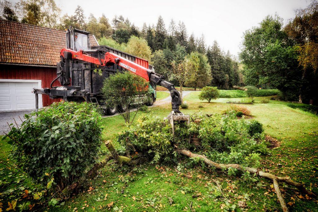Bortforsling av träd Tradnu AB i och runt Göteborg med omnejd