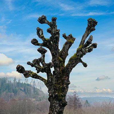 Hamling en trädbeskärning Tradnu AB