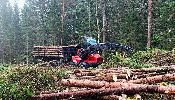 Skogsavverkning Tradnu AB