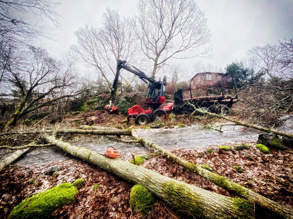 Trädavverkning tomtmark med skördare Tradnu AB i och runt Göteborg med omnejd
