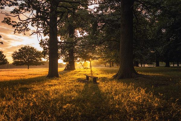 Trädvård i parker och golfbanor Tradnu AB i och runt Göteborg med omnejd