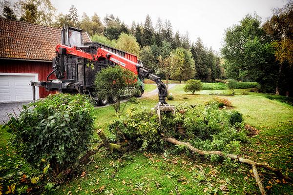 Bortforsling av träd vid beskärning eller avverkning Tradnu AB i och runt Göteborg med omnejd
