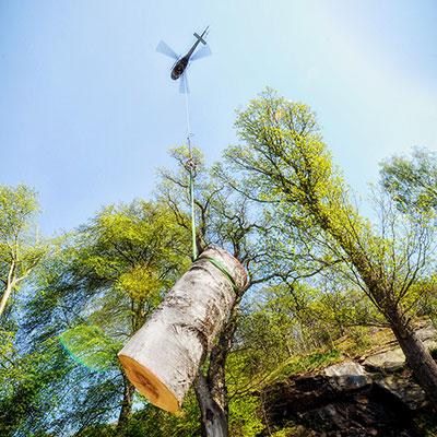 Trädfällning bortforsling med helikopter Tradnu AB i och runt Göteborg med omnejd