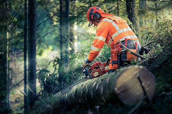 Arborist Trädfällning Tradnu AB i och runt Göteborg med omnejd
