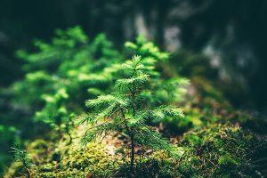 Plantering av skog Trädnu AB