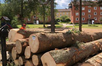 Trädfällning nära bostad, tomtmark Tradnu AB i och runt Göteborg med omnejd