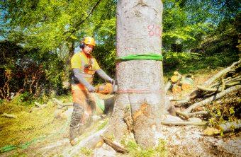 Trädfällning Tradnu AB i och runt Göteborg med omnejd