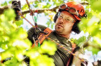 Säker trädfällning och beskärningTradnu AB i och runt Göteborg med omnejd